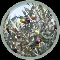 olives-tournantes