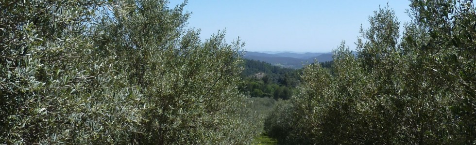 huile-d-olive-vallon-de-lallamande-provence-AOC-h2